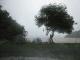 03-new-zealand-northlands-bay-of-islands-rain.jpg